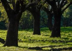 סביון - בית אבות בקיבוץ שמיר
